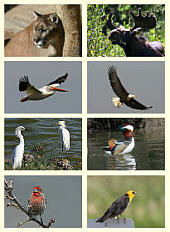Thumbnails, Birds and Animals